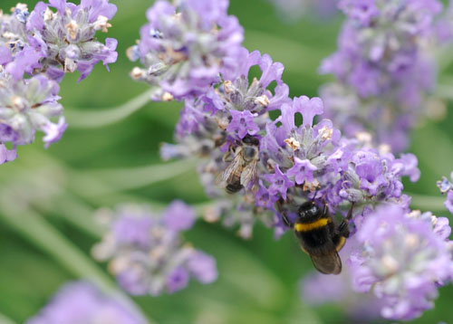 insettismall.jpg
